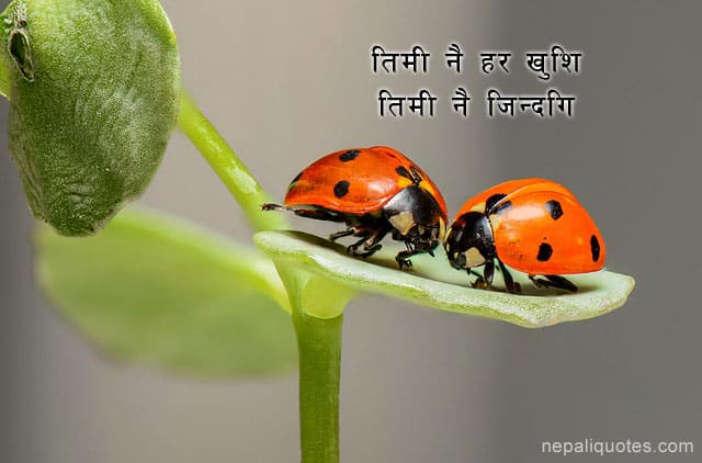 Nepali Shayari Haru