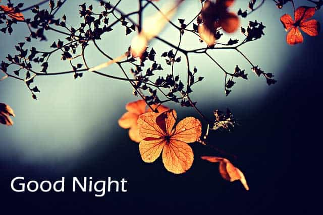 Download Best Good Night Images HD